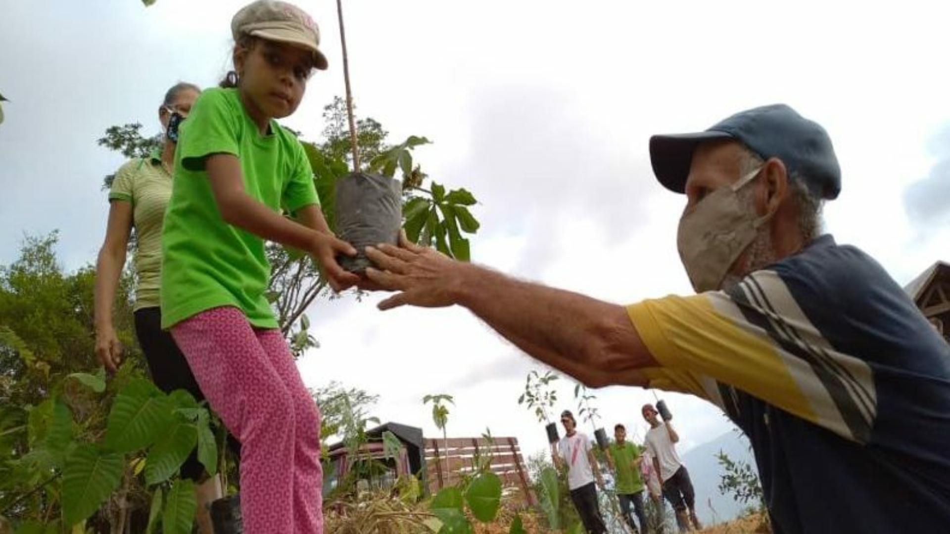 Re-forestación tierra viva
